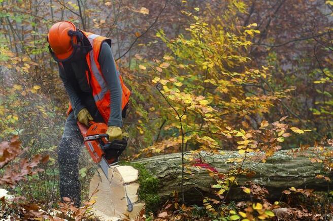 commercial tree service caledon