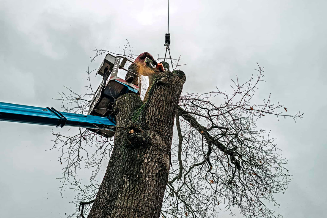 large tree removal Caledon